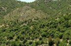 حفاظت از جنگل ها ومنابع طبیعی ضرورتی برای حیات بشری
