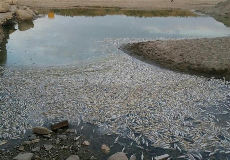 میزان آبزیان تلف شده رودخانه تیره دورود مشخص نیست