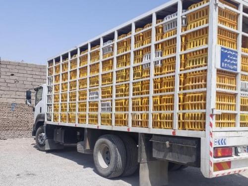 كشف 215 تن مرغ زنده قاچاق در لرستان